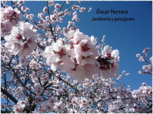 flores_almendro